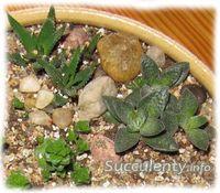 mini-succulent-garden2