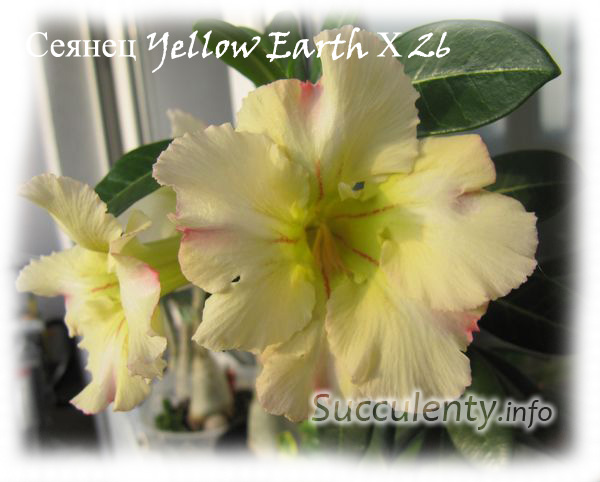 Yellow-Earth-Х-26-2