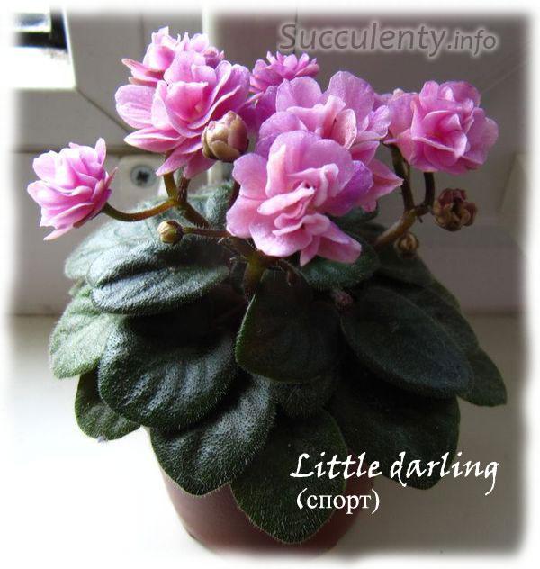 Little-darling-sport