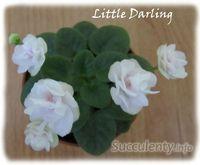 Little-darling
