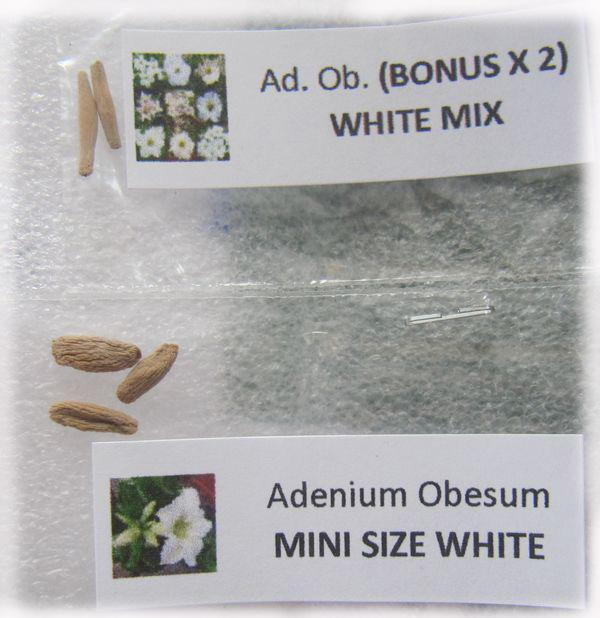 seeds White Mini